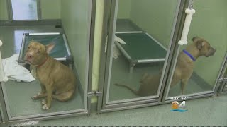 Pets Evacuated Ahead Of Hurricane Florence Find Shelter In South Florida