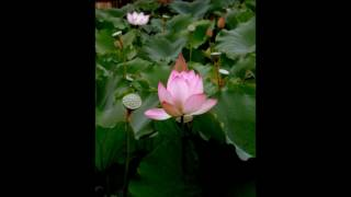 Baul Song - তোমায় আমি ভূলিতে পারি না, বাউল সম্রাট আবেদ আলী