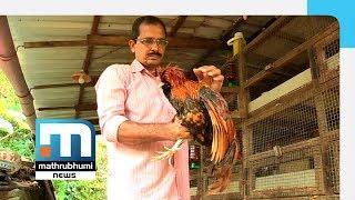 Saji Rears Ornamental Chicken, Makes Money | Mathrubhumi News