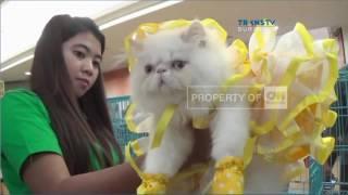 Kontes Kucing Unik