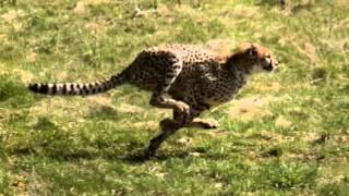 Animals - Maroon 5 Music Video