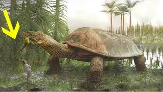 आख़िर क्या हुआ था 600 करोड़ साल पहले ?How the life started on earth and destroyed dinasaur !! Science