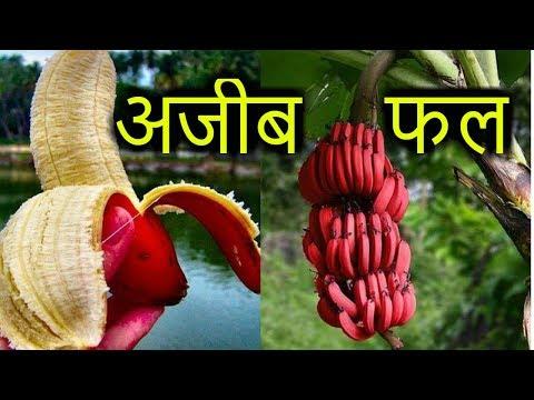Xxx Mp4 Hindi 8 STRANGE FRUITS दुनिया की 8 अजीब फल 3gp Sex