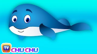 Blue Whale Nursery Rhyme | ChuChuTV Sea World | Animal Songs & Nursery Rhymes For Children