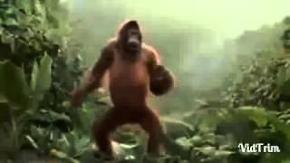 videos engraçados 'hoje  sexta feira' kkkk