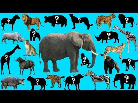 Xxx Mp4 Bunyi Haiwan Untuk Kanak Kanak Belajar Haiwan Dan 60 Nama Haiwan Liar Jinak BonBi TV ASIA 3gp Sex