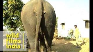 Elephant farts!!!