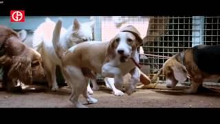 temper video song nagaraju pasarlapudi