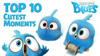 Angry Birds Blues  - Top 10 Cutest Moment