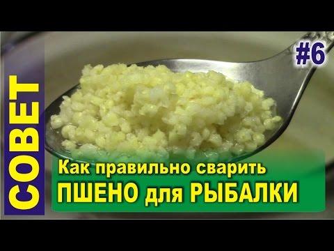 пшеничная крупа для прикормки