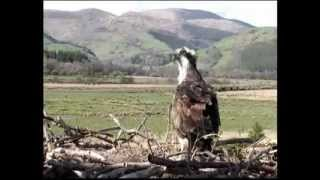 BBC Springwatch 2013 - Episode 2