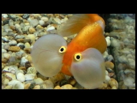 The Funniest Fish Ever Funny But Ugly and Scary Fish
