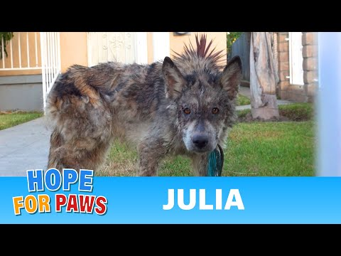 Xxx Mp4 Julia A Wolf A Coyote A Dog This Rescue Is A MUST SEE 3gp Sex