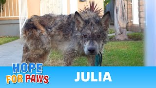 Julia: a wolf?  a coyote?  a dog?  This rescue is a MUST SEE!
