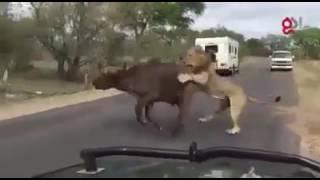 Gujarat lion movie