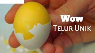 Cara Membuat Telur Kuning Diluar Putih Didalam [EKSPERIMEN]