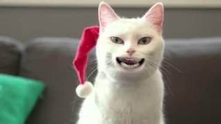 Piosenki świąteczne [1]. Kot śpiewa?!