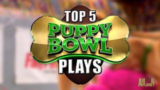 Puppy Bowl Spot Center: Top 5 Plays