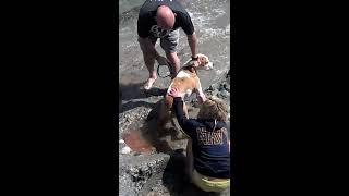 Pitbull attacks Baby Seal