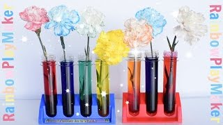 CARNATIONS RAINBOW COLOR CHANGING ♥ DIY SCIENCE EXPERIMENT ♥ Simple & Fun