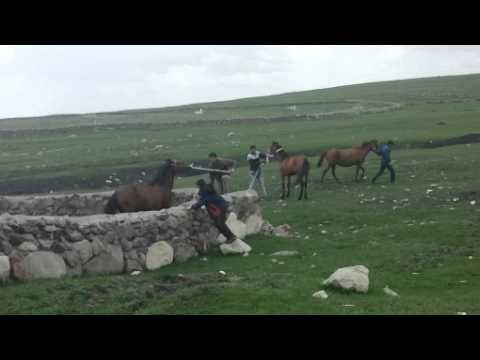 Çılgın Atlar