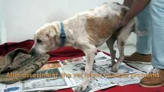 Sad story can make you cry -  A dogs story...