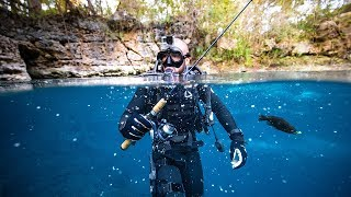 Underwater Fishing and Scuba Diving Clear Water Swamp!! (Paradise)