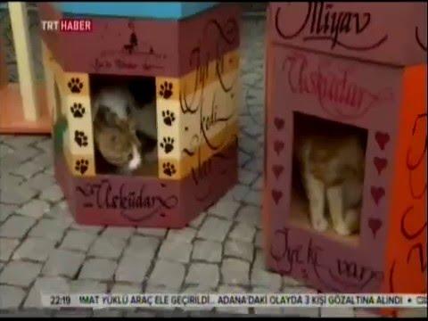 Üsküdar'da Çocuklar Kedilere Özel Ev Yaptı - TRT Haber