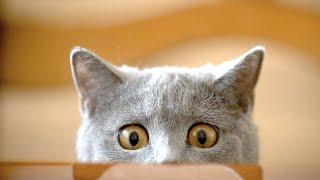 FUNNY CATS ★ Funny Cat Videos 2015 & 2016 (HD) [Funny Pets]