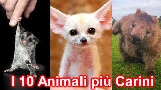 10 STRANI ANIMALI DOMESTICI SUPER DOLCI E COCCOLOSI