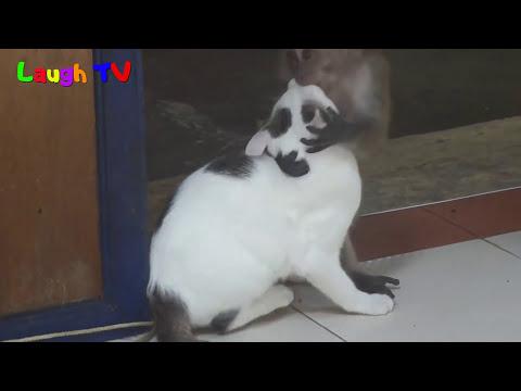 Xxx Mp4 Funniest Monkey Annoying Cat Videos Compilation NEW HD 3gp Sex