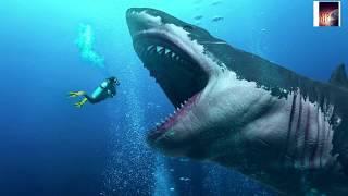 পৃথিবীর সবচেয়ে বড় সার্ক || World's Biggest Shark Detail In Bengali..
