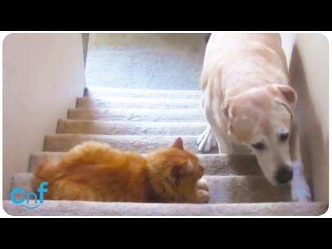 Dog V Cat | Scaredy Dog On the Stairs