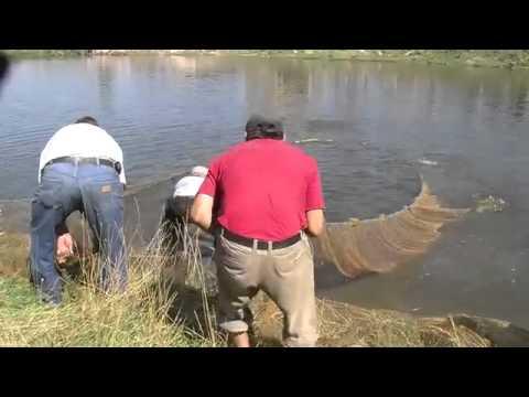 рыбалка в бишкеке платная