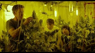Cannabis Kid   l   Trailer deutsch HD