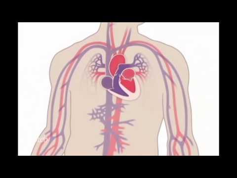 Xxx Mp4 كيف يعمل القلب والدورة الدموية ؟ 3gp Sex