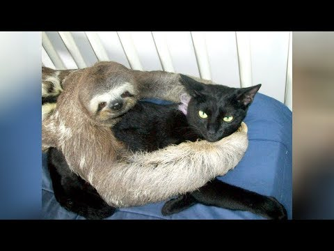 Super WEIRD & CUTE ANIMAL FRIENDSHIPS I BET you will LAUGH FOR HOURS