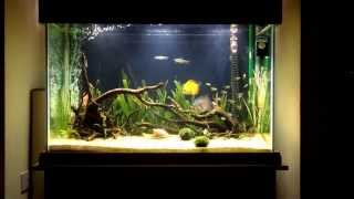 My 200 litre discus tank