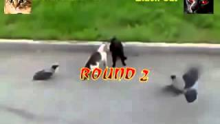 Peleas de gatos estilo mortal kombat