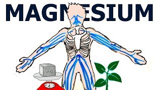 Why is MAGNESIUM So Important for the HUMAN BODY?