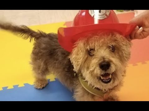 Xxx Mp4 LIVE Rescue This Adoptable Dog In New York City Today FRANKIE The Dodo Clear The Shelters 3gp Sex
