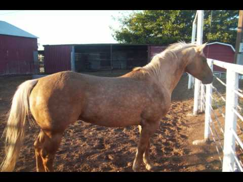 caballos de vicente fernandez