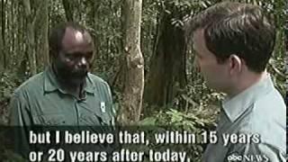 Bonobo chimps on nightline having sex aka conflict resolution!