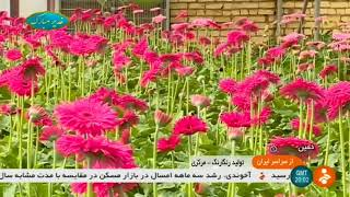 Iran Flowers greenhouse, Khomein county گلخانه پرورش گل شهرستان خمين ايران