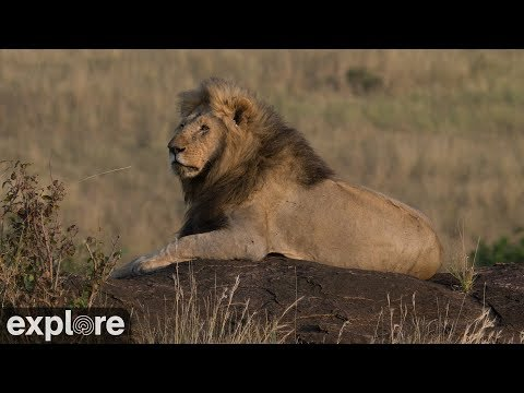African Wildlife Meditation powered by EXPLORE.org