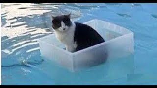 Best Funny cats compilation
