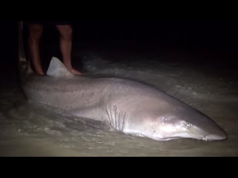 ASFN Rock & Surf - Targeting Big Ragged Tooth Sharks at Cape St Francis Eastern Cape