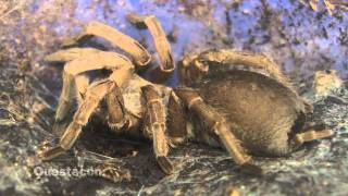 Science Time - Spiders and Insects