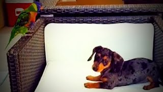 Awesome Pets  😍 Funny and Cute Pets (Part 1) [Funny Pets]
