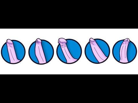5 Tipos de penes y sus posturas